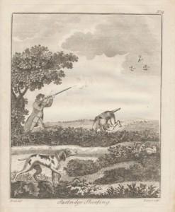 partridge-shooting